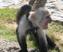 Spun Monkey