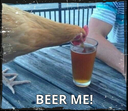 Rough day in the chicken coop, cock? Beer me.  © Captain Gal Design .jpg