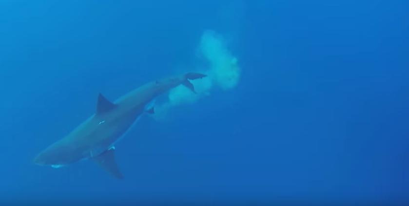 shark-poop-still.png