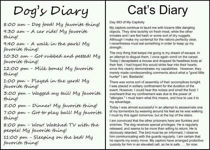 Cats & Dogs.jpg