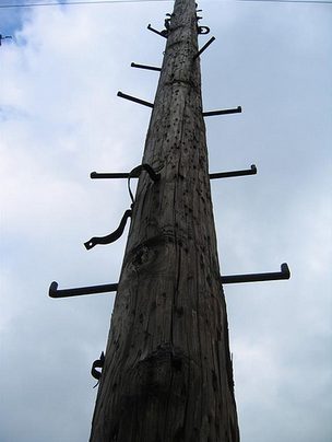 telephone pole.png