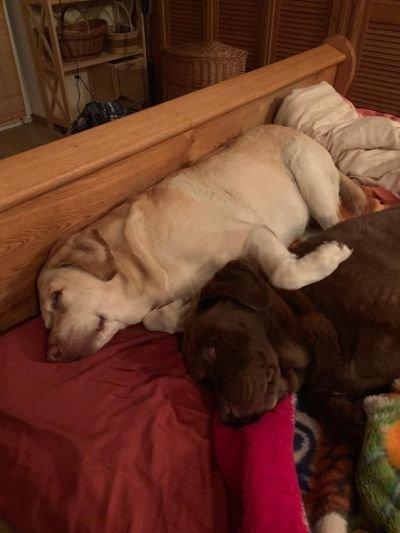 Puppy Love rs.jpg