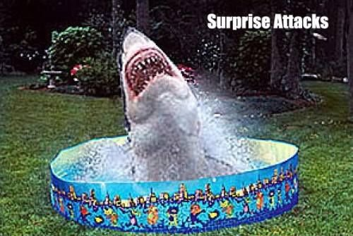 pool-shark-4.jpg