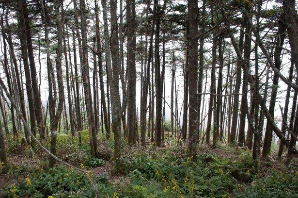 thick-forest.jpg.a24d9b756d138bdf142969a34bf69596.jpg