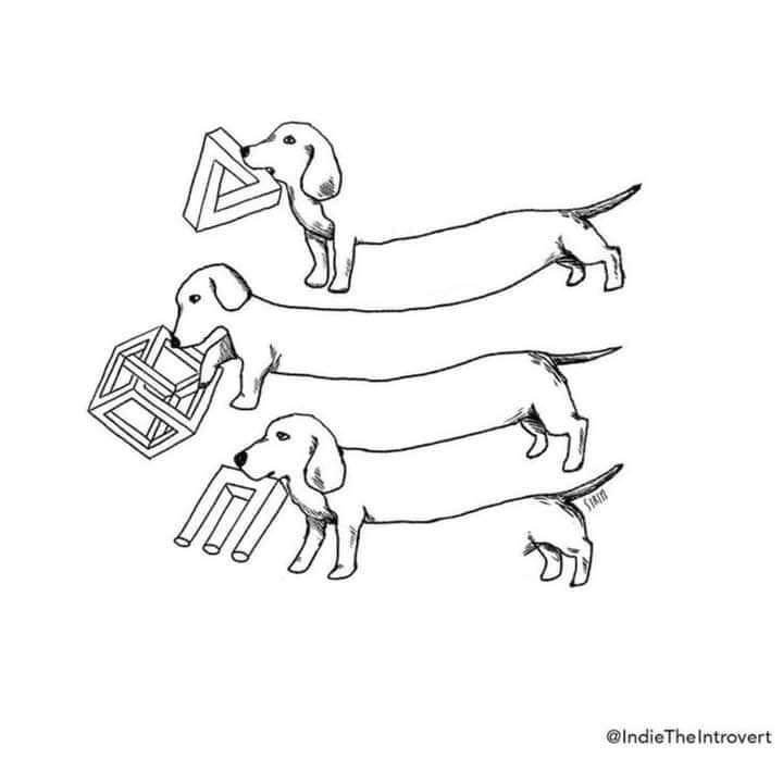 impossible dogs.jpg