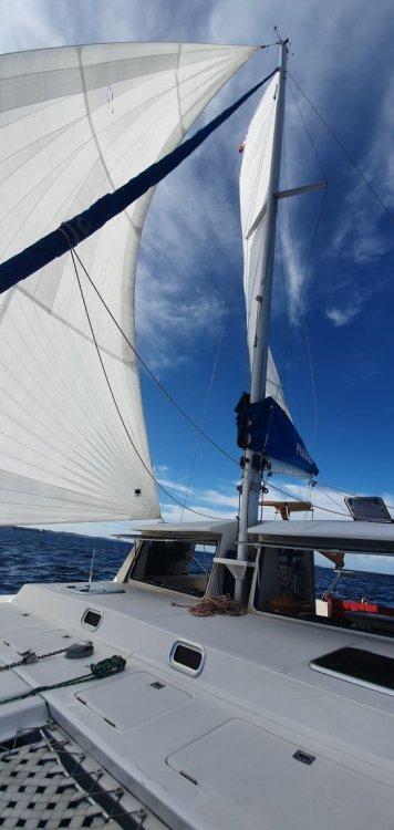 Cat Bora Bora 36 02.jpeg