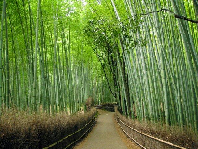 kyoto-arashiyama-bamboo-grove-213958.jpg