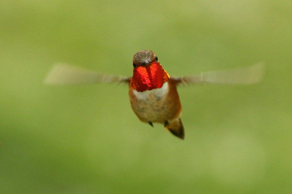 inquisitive hummer.jpg