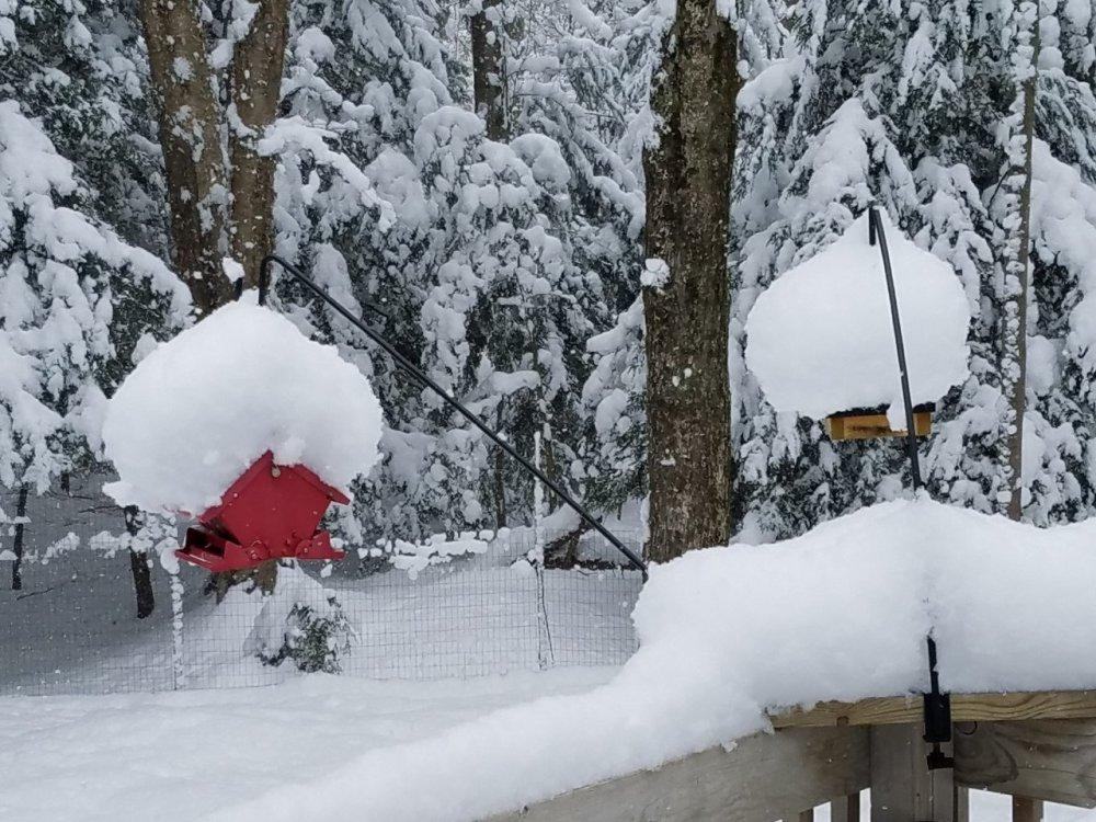 bird feeder snow.jpg