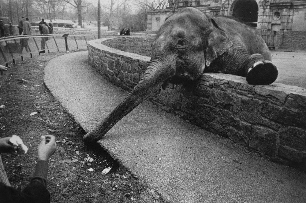 Bronx-Zoo-New-York-cde-1200x796.jpg