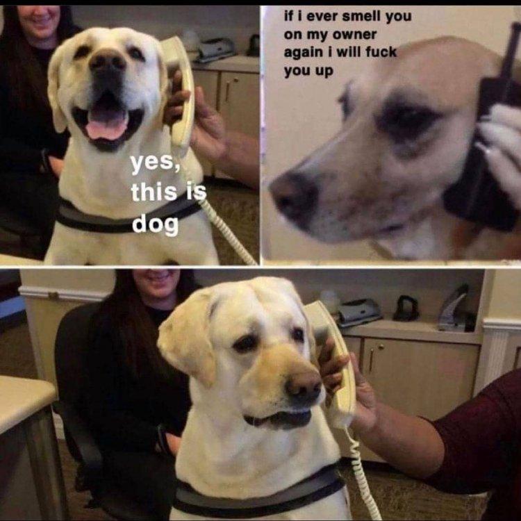 Dog call.jpg