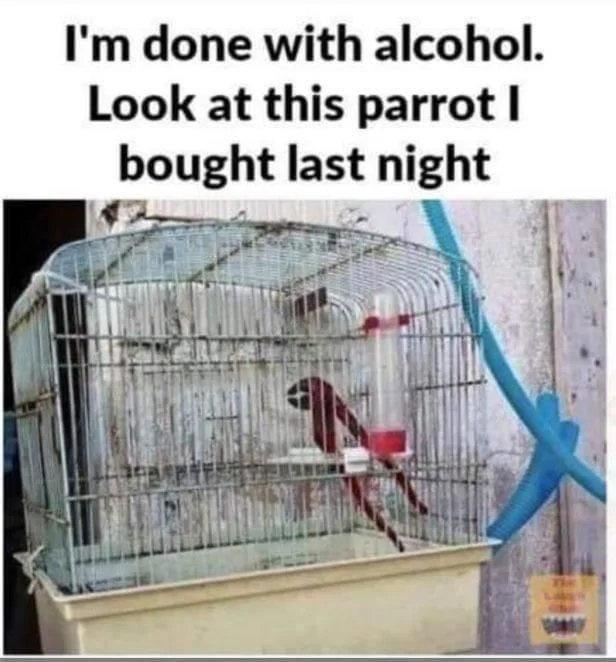 drunk parrot.jpeg